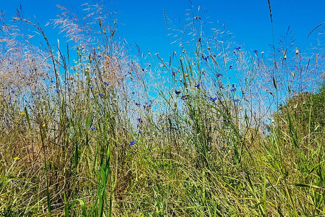 Blumenwiese Nahaufnahme im Sommer